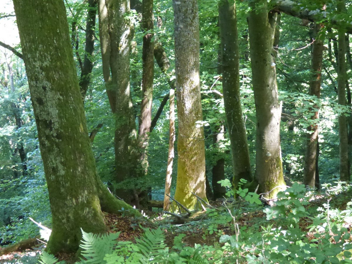 Pro Bözberg: Mehr naturnaher Wald.