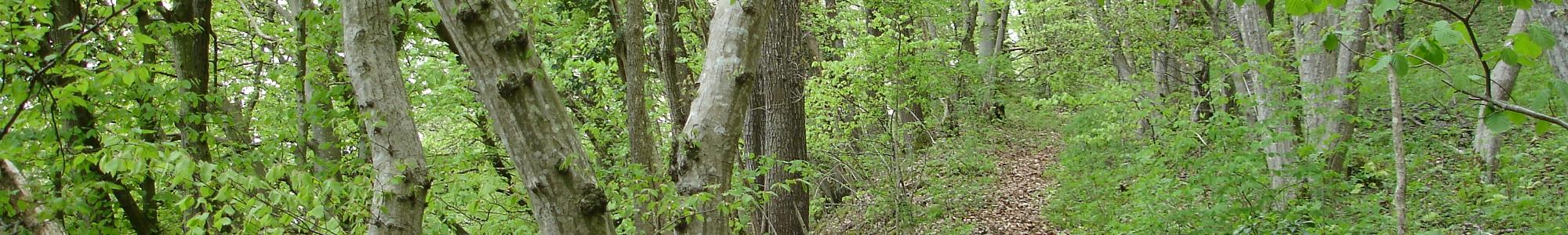 Landschaft- und Naturschutz